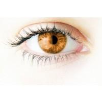 Eyeling Light Brown 1 linssi